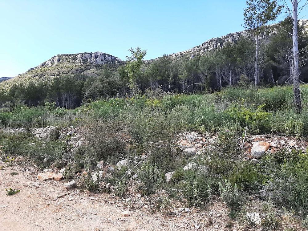 Randonnée sur La Barre de Cuers par les Veys, à seulmenet 10 mns de votre gite dans le Var-Relais du Gapeau