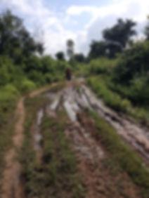 Dirt road from Koas Krala to Bech Khlok