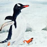 Mit Flossen durch den Schnee (nach Stefan Forster)