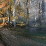 Herbst im Jasmundpark (2)