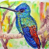 Kolibri in schillernden Farben