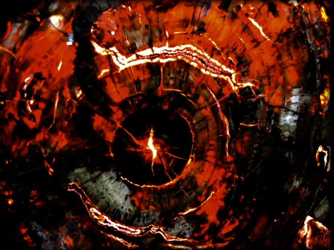 Red Petrified Wood Backlit