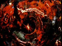 Red Petrified Wood Backlit