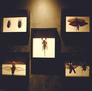 24-bugs-1.jpg