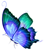 Butterfly transparent png