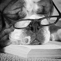 Smart Dog 2014-10-16-20:23:48