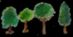 arbres détourés.png