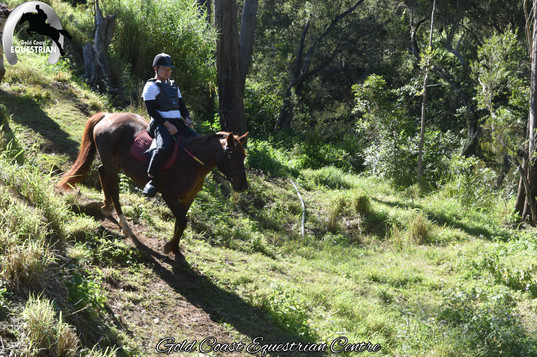 Calm, safe horses for all levels of riders
