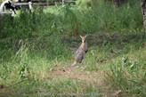 Wildlife along the way