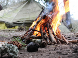 fire_camping_camp_nature_campfire_forest