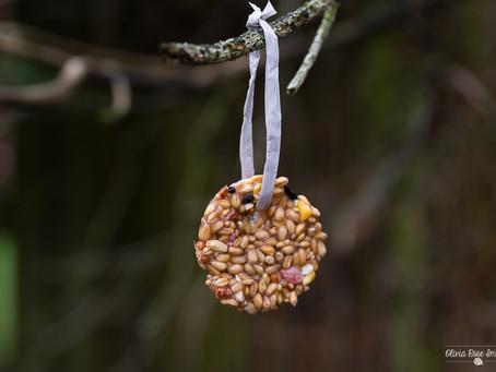 blogmas #8- DIY bird feeders