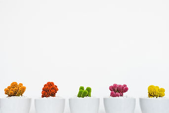 art-artistic-beautiful-bloom-311458.jpg