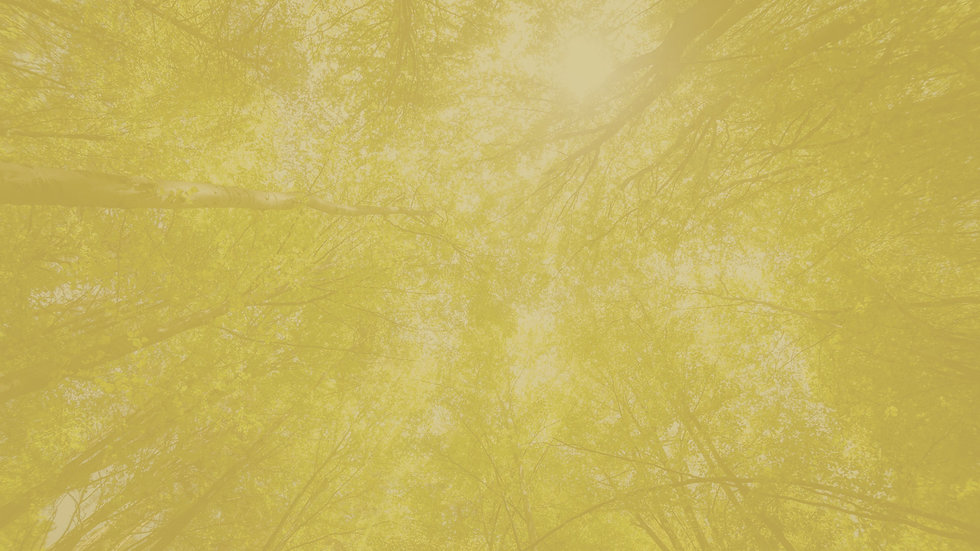 arbre-1920x1080px.jpg