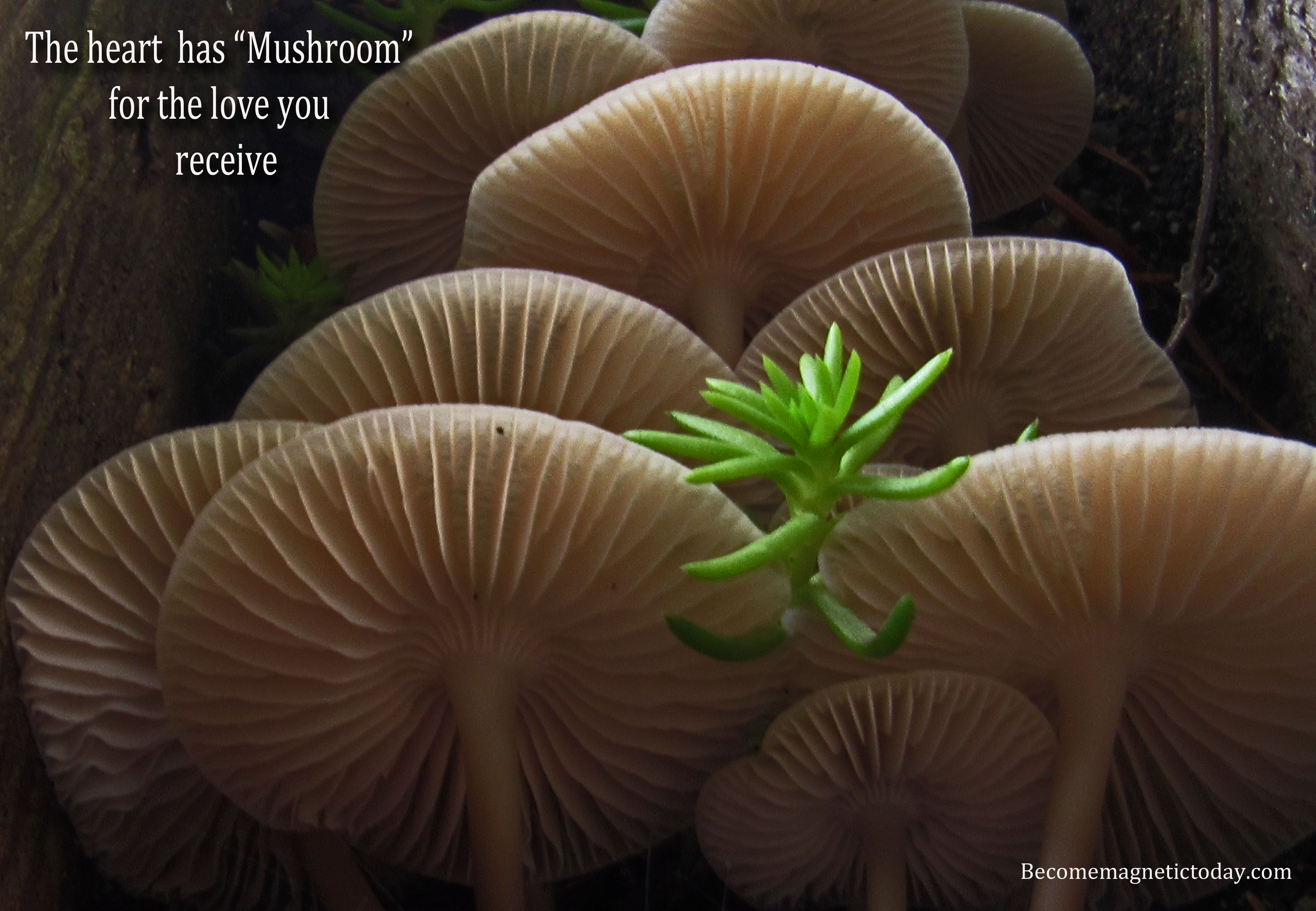 """""""Mushroom"""" for love"""