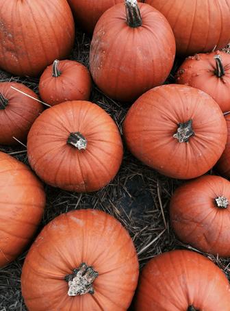 October Pumpkin Patch at Cammas Hall
