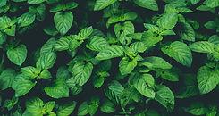 10-ways-to-use-fresh-mint-elizabeth-ride