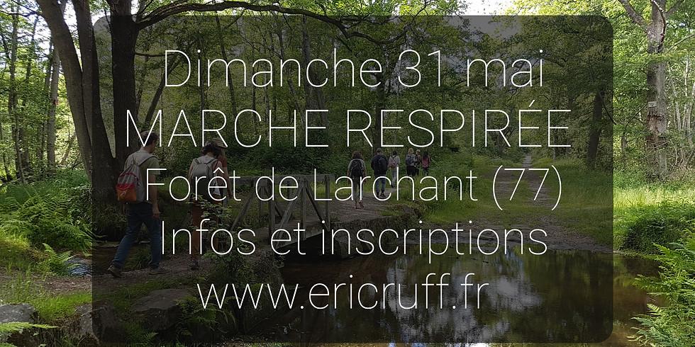 MARCHE RESPIRÉE EN FORÊT (2H00)