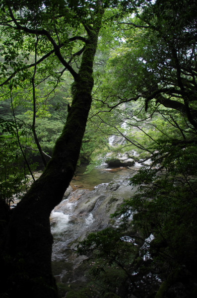 屋久島白谷雲水峡の綺麗な河原