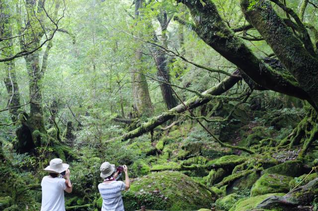 屋久島白谷谷雲水峡苔むす森