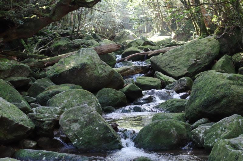 白谷雲水峡苔むした渓谷