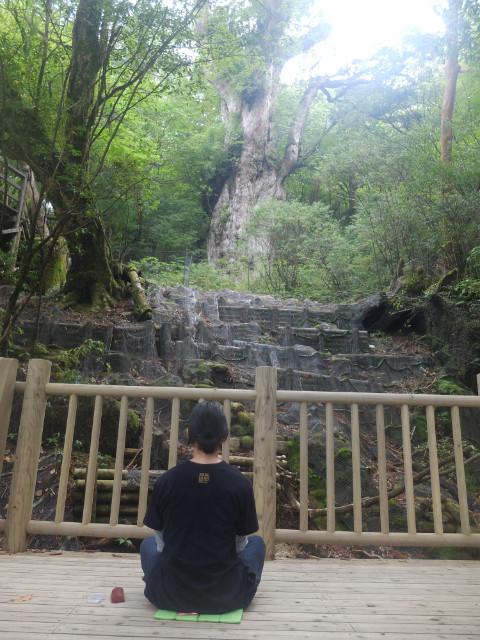 縄文杉で瞑想