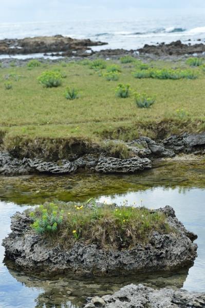 屋久島離水サンゴ礁を散歩