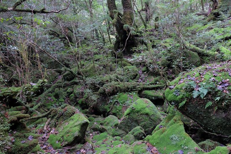 屋久島白谷雲水峡ツアー