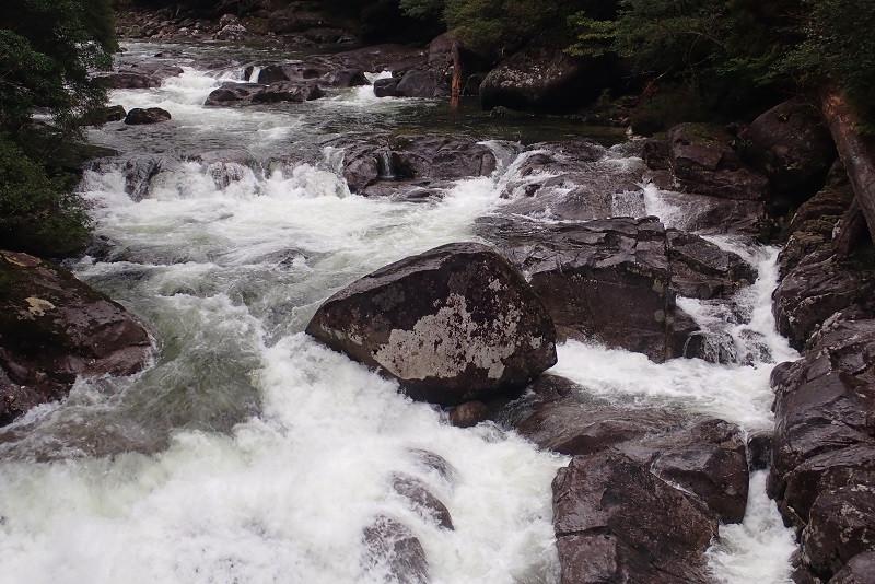ヤクスギランドの荒川