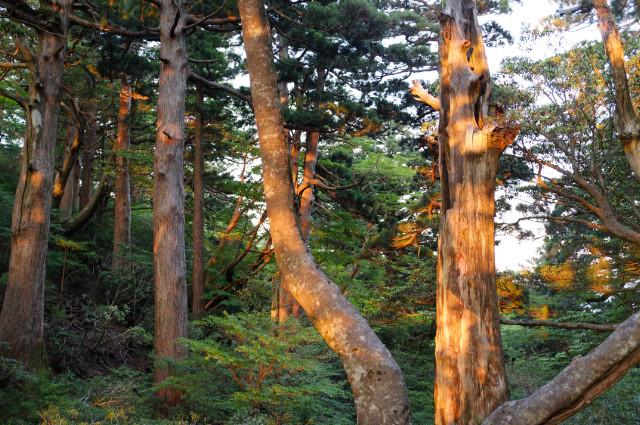 縄文杉コース、高塚小屋の景観