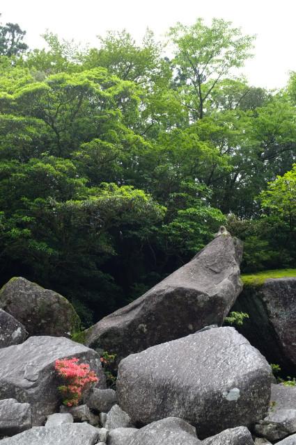ヤクシマザルとサツキと大岩