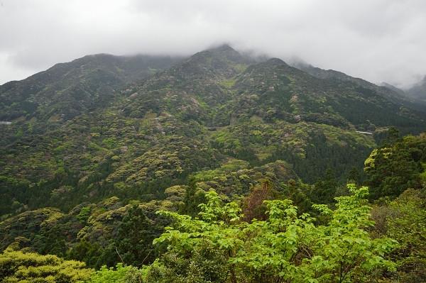 屋久島白谷雲水峡線の新緑2