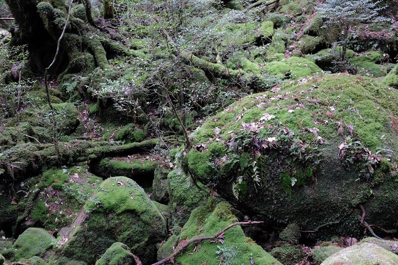 苔むす森、白谷雲水峡