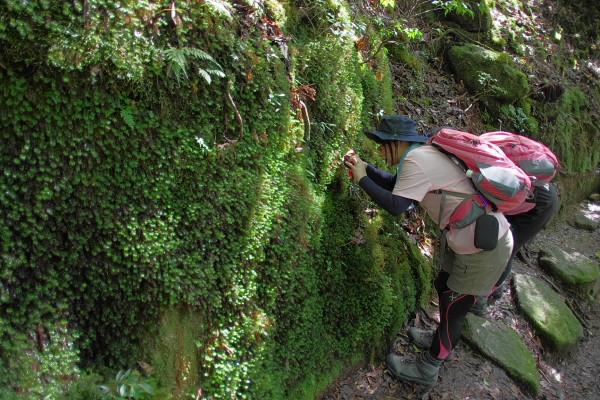 屋久島の苔