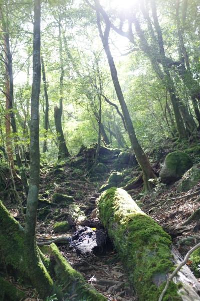 屋久島白谷雲水峡の森の風景