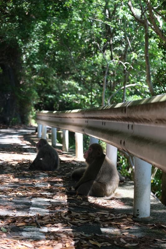 ヤクシマザル、屋久島の動物