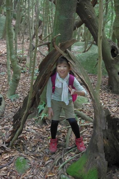 屋久島照葉樹の森