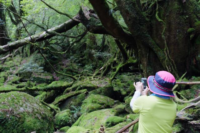屋久島白谷雲水峡苔むす森ツアー