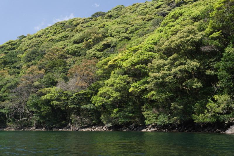 屋久島安房川の新緑