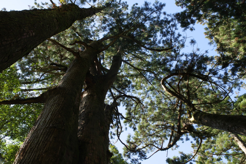 ヤクスギランドの巨木達