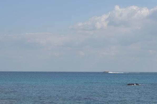 屋久島高速船トッピー&ロケット