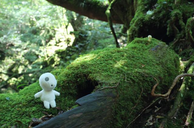 白谷雲水峡のもののけ姫のコダマ