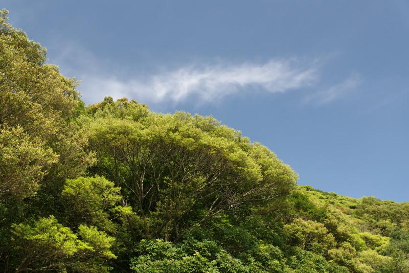 屋久島春の新緑