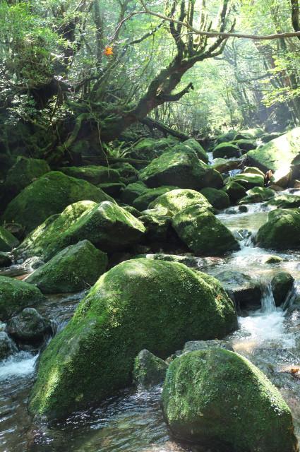 白谷雲水峡苔むす渓谷を渡る