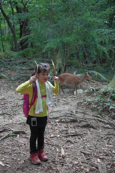 屋久島西部林道は生き物がいっぱい