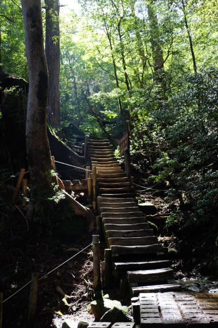 縄文杉コースの木道