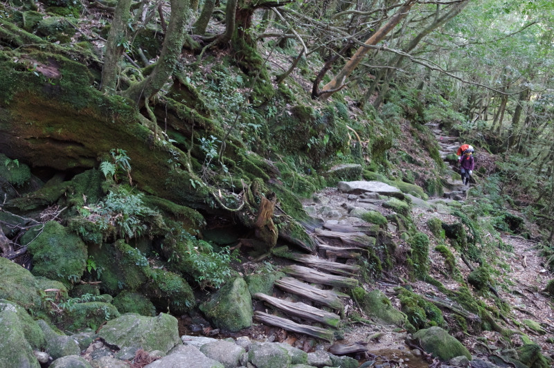 白谷雲水峡登山道