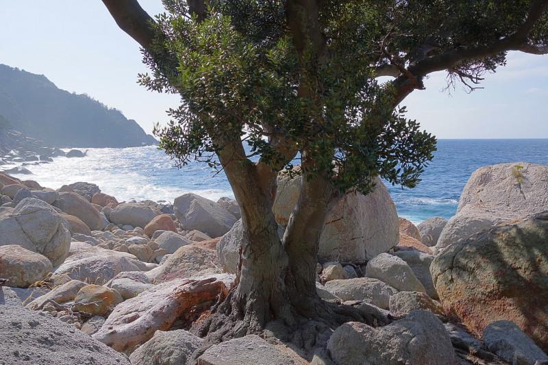 屋久島世界自然遺産ツアー