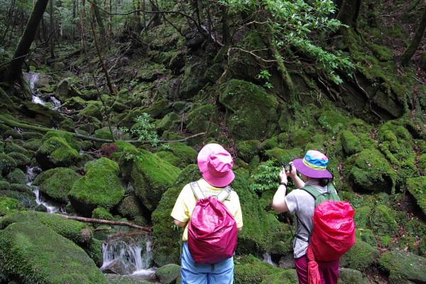 白谷雲水峡の苔むした森を観察