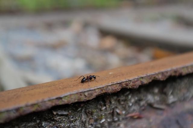 縄文杉コース、トロッコ道のアリ