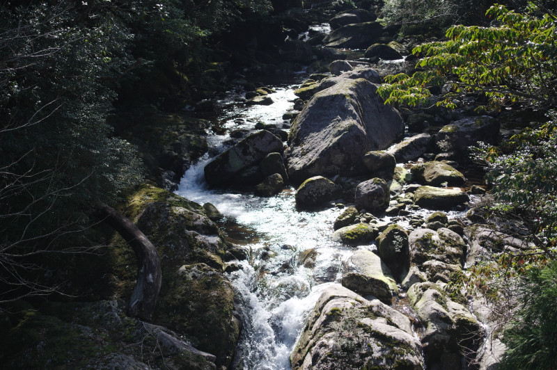 屋久島の渓谷